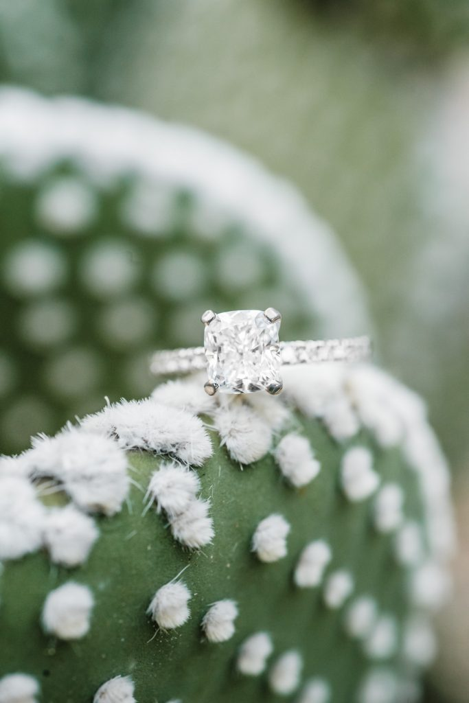 Brilliant engagement ring closeup on fuzzy cactus paddle