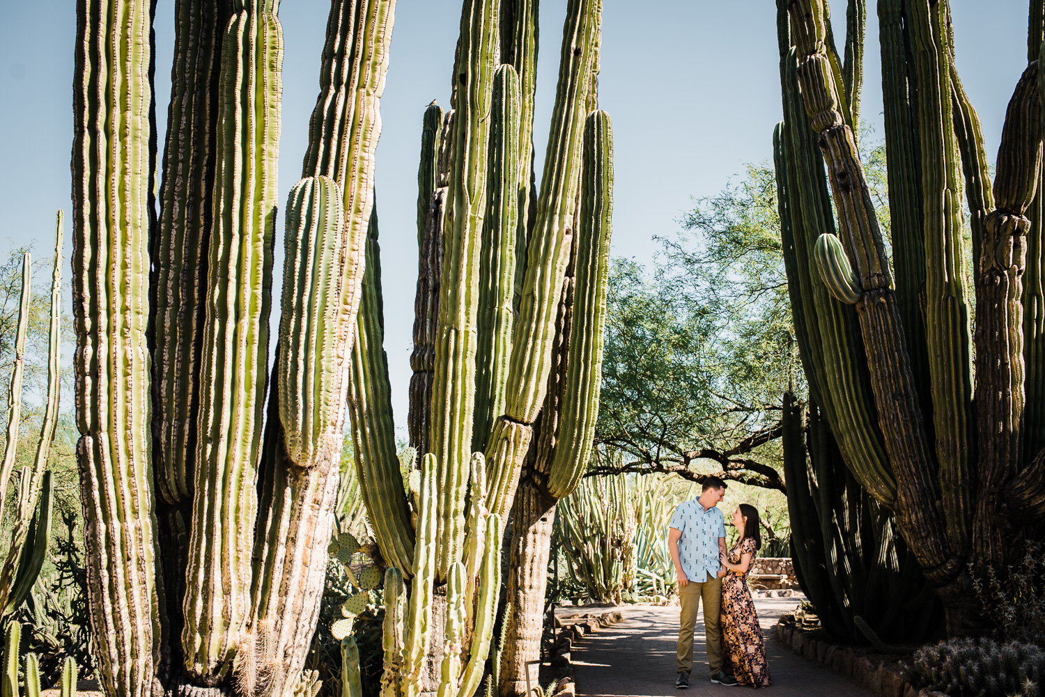 Desert Botanical Gardens Engagement Photo